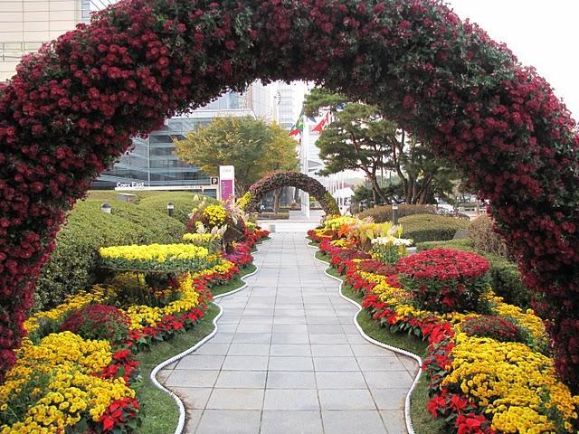 Южная корея утопает в цвете хризантем